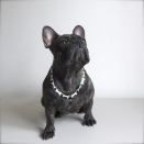 Hundägarens halsband